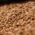 Główne odmiany zbóż cz. 3