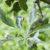 Rodzaje chorób roślin