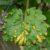 Środki walki z chorobami roślin