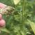Postępowanie w wypadkach wystąpienia chorób roślin