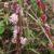 Choroby roślin motylkowych