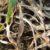 Inne choroby ździebeł i liści