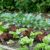 Siew i sadzenie warzyw